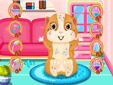 Fluffy Hamster Salon
