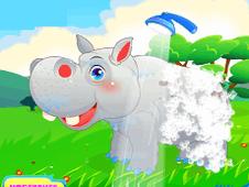 HippopotamusCare