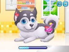 Cute Puppy Pregnant